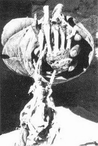 The Pangboche Hand